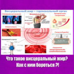 Как образуется жир в области живота - Статьи